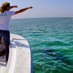 Wisata hiu tumbuh di Cape Cod Massachusetts, 3 tahun setelah serangan